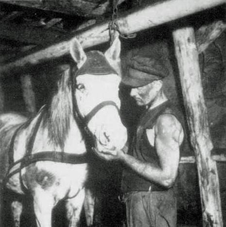 steenkool paard mijnen